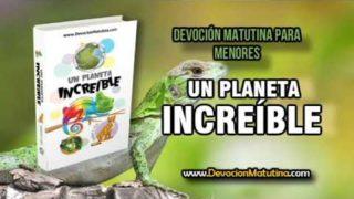 Martes 28 de agosto 2018   Devoción Matutina para Menores   El mundo de los insectos