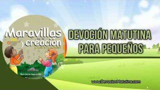 25 de febrero 2019   Devoción Matutina para Niños Pequeños   Ciruelas de colores